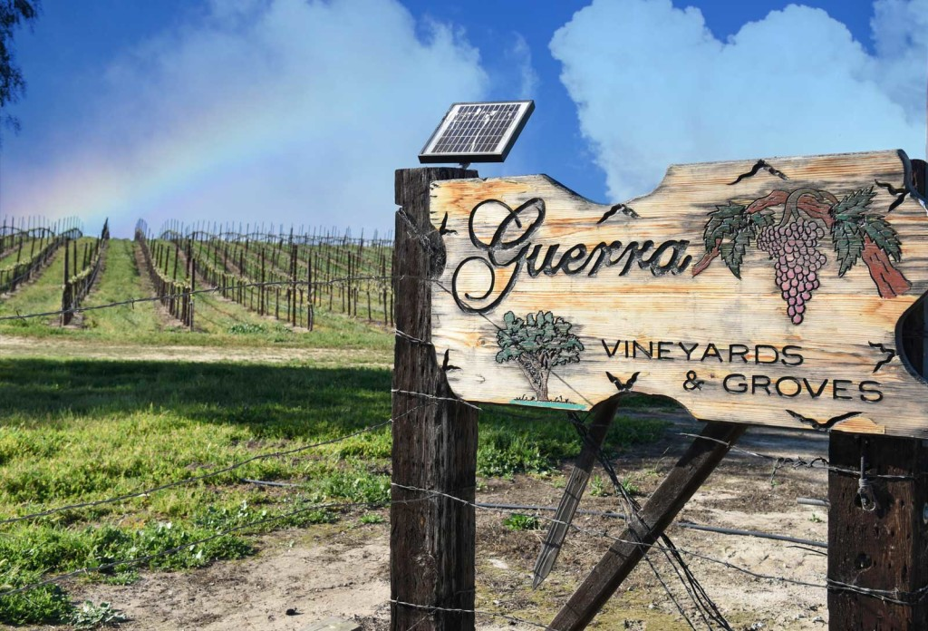 San Benito County Wineries Guerra